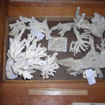 coral collection showing scale