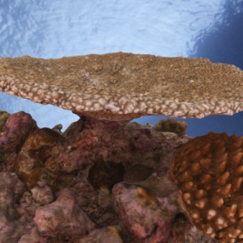 full coral colony