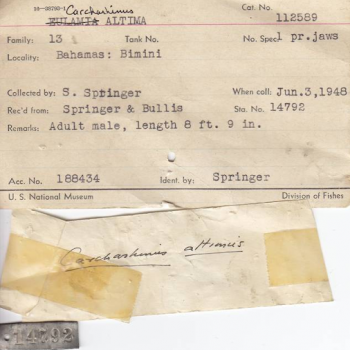 paper record of shark specimen