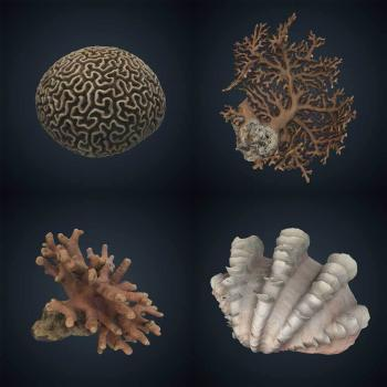 variety of corals