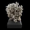 rendered image of seriatopora hystrix