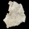 rendered image of agaricia speciosa