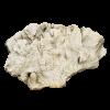 rendered image of pavonia decussata