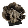 rendered image of gemmipora brassica