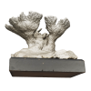 rendered image of acropora palmata