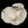 rendered image of Leptoseris cucullata