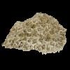 rendered image of diploastrea heliopora