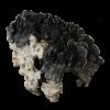 rendered image of heliopora coerulea