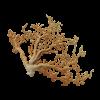 rendered image of corallium sp