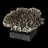 rendered image of madrepora surculosa