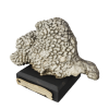 rendered image of montipora danae