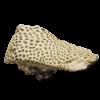 renderd image of Astraea (Fissicella) pulchra