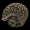 rendered image of Diploria labyrinthiformis
